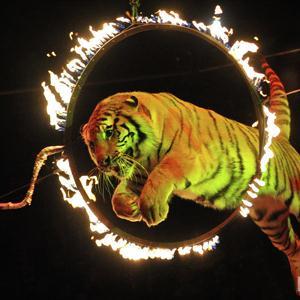 Цирки Зеленограда