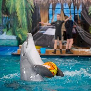 Дельфинарии, океанариумы Зеленограда
