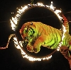 Цирки в Зеленограде